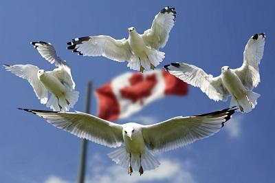 Was muss ich bei der Einreise nach Kanada beachten?
